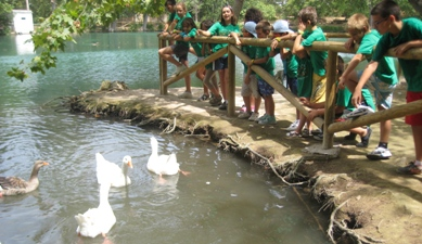 Laexcursionpatos